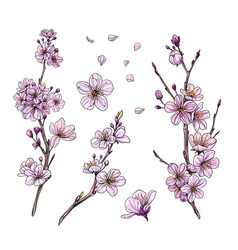 sakura in bloom set three branches and flowers vector image