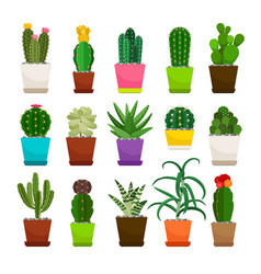 cactus houseplants in flower pots set vector image