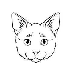 black and white sketch of cats head face of pet vector image