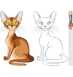 Coloring Book of red cat Abyssinian vector