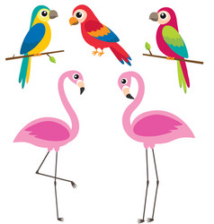 cute cartoon parrots and flamingos vector image