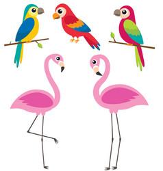 cute cartoon parrots and flamingos vector image
