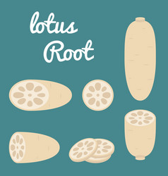 Lotus root vector