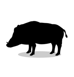 boar wildlife black silhouette animal vector image