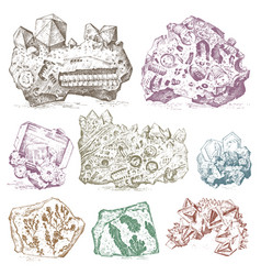fossilized plants stones and minerals crystals vector image vector image