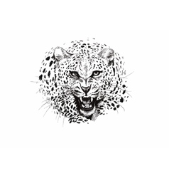 Angry leopard muzzle black and white sketch vector image