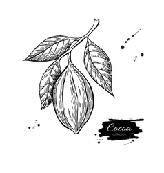 Cocoa branch superfood drawing isolated vector