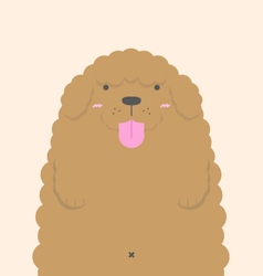 cute big fat brown Poodle dog vector image