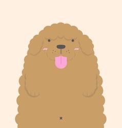 cute big fat brown Poodle dog vector image