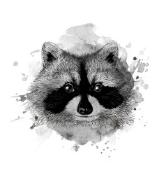 raccoon head vector image