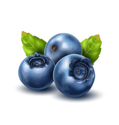 realistic blueberry with 3d leaves set vector image