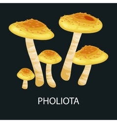 Shaggy Pholiota Mushrooms isolated edible vector