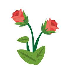 Rose flower spring image vector