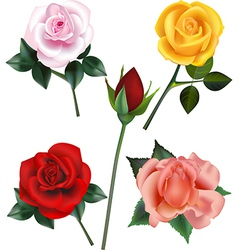 Rose collection vector image