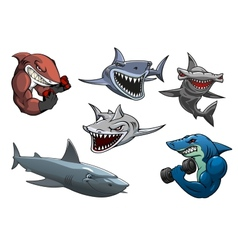Angry grey white and hammerhead sharks cartoon vector