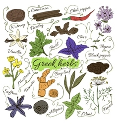 Colorful insulated set of local hand drawn herbs vector