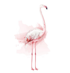 flamingo watercolor pink bird isolated on vector image
