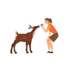 Girl zoo worker feeding badeer with bottle of vector
