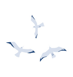 seagulls in a flat cartoon style isolated on white vector image