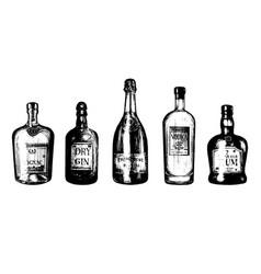 hand sketched bottles of alcoholic beverages rum vector image