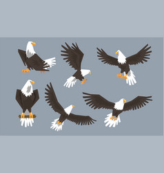 Bald eagle in various poses collection pride and vector