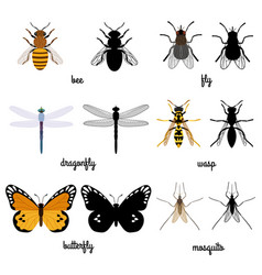 Colorful and black silhouettes flying insects vector