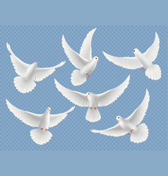 realistic doves white freedom flying birds vector image