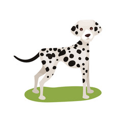 dalmatian dog purebred pet animal standing on vector image