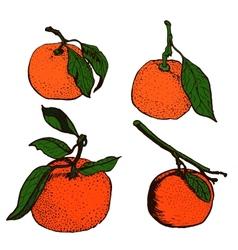 Tangerine sketches vector image vector image
