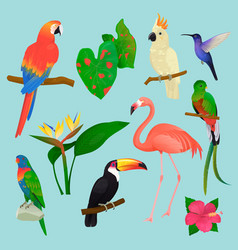 tropical birds flamingo and exotic parrot vector image