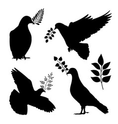 dove peace silhouettes pigeon with branch vector image