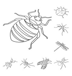 Isolated object fauna and entomology sign set vector