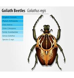 Gothiath beetle vector