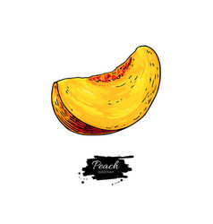 Peach slice drawing isolated hand drawn vector