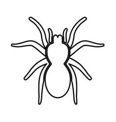 spider or tarantula black icon vector image