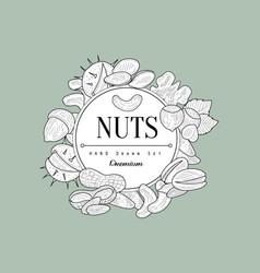 Nuts collection vintage sketch vector
