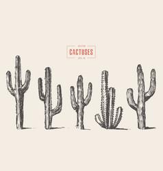 set cactus hand drawn sketch vector image