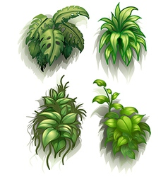 Leafy plants vector
