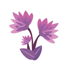 lily flower spring image vector image