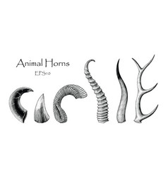 animal horns set hand drawing vintage engraving vector image