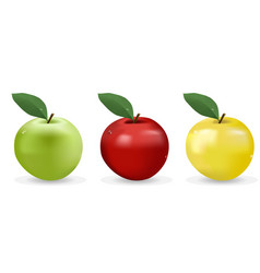 apples vector image