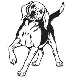 beagle hound black white vector image