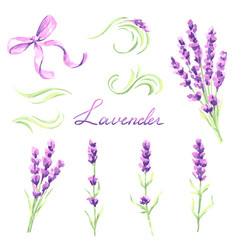 Lavender flowers and bunches set watercolor vector