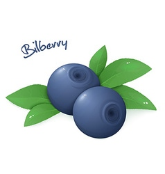 Realistic isolated ripe bilberry with leaves vector