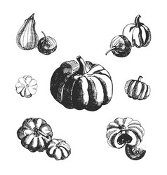 vintage ink hand drawn collection of pumking vector image