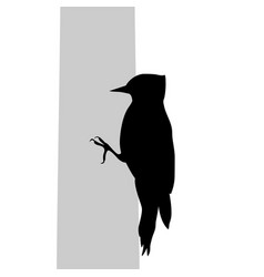 Woodpecker bird black silhouette anima vector