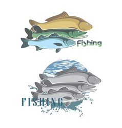 pike perch vector image vector image