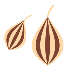Ajwain icon isolated vector