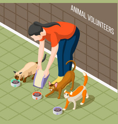 cats volunteer isometric background vector image