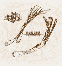 Digital detailed line art spring onion vector